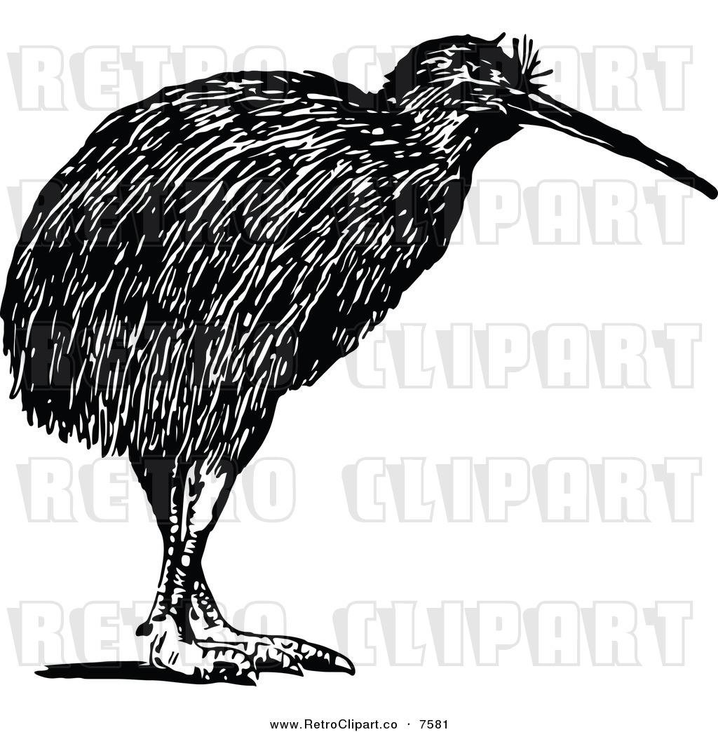 Kiwi White Black And White Kiwi Bird