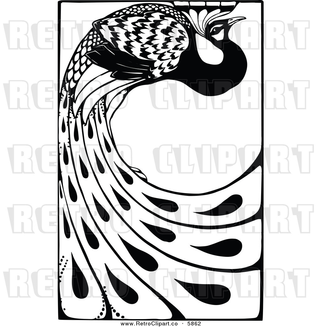 Black And White Peacock