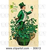Clip Art of Retro Victorian St Patrick's Day Scene of a Leprechaun or Isirh Guy Standing in a Pot of Shamrocks, Holding a Clover, Circa 1910 by OldPixels