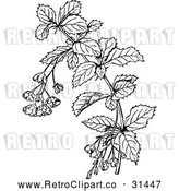 Vector Clip Art of a Retro Barberry Branch - Black and White by Prawny Vintage