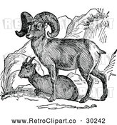 Vector Clip Art of a Retro Bighorn Sheep Pair by Prawny Vintage