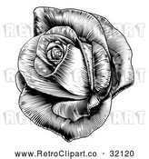 Vector Clip Art of a Retro Black Blooming Rose by AtStockIllustration