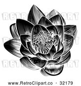 Vector Clip Art of a Retro Black Blooming Waterlily Lotus Flower by AtStockIllustration