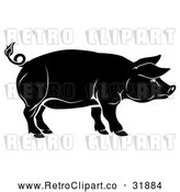 Vector Clip Art of a Retro Black Pig in Profile by AtStockIllustration