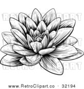 Vector Clip Art of a Retro Blooming Waterlily Lotus Flower by AtStockIllustration