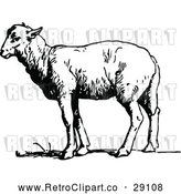 Vector Clip Art of a Retro Sheep Standing Still - Black and White by Prawny Vintage
