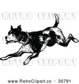 Vector Clip Art of an Old Retro Dog Running Playfully in Black and White by Prawny Vintage