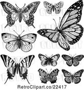 Vector Clip Art of Butterflies 1 by BestVector