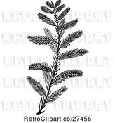 Vector Clip Art of Cypress Sprig by Prawny Vintage
