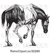 Vector Clip Art of Engraved Horse Anatomy of Muscular Covering Rear View in by Picsburg