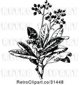 Vector Clip Art of Retro Allspice Plant by Prawny Vintage