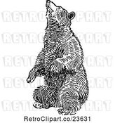 Vector Clip Art of Retro Bear Balancing on Its Hind Legs by Prawny Vintage