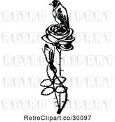 Vector Clip Art of Retro Bird Perched on a Rose by Prawny Vintage