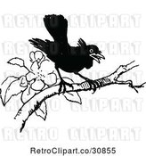 Vector Clip Art of Retro Black Bird Perched on a Blossoming Branch by Prawny Vintage