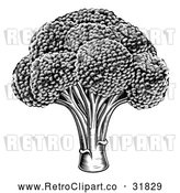 Vector Clip Art of Retro Black Broccoli by AtStockIllustration