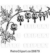 Vector Clip Art of Retro Border of Bleeding Heart Flowers by Prawny Vintage