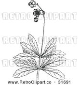 Vector Clip Art of Retro Botanical Plant with Flowers 2 by Prawny Vintage