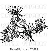 Vector Clip Art of Retro Branch with Pinecones by Prawny Vintage