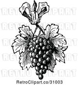 Vector Clip Art of Retro Bunch of Grapes with Leaves by Prawny Vintage