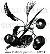 Vector Clip Art of Retro Cherry Branch by Prawny Vintage