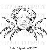 Vector Clip Art of Retro Crab by Prawny Vintage
