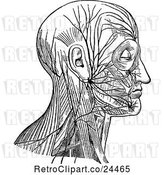 Vector Clip Art of Retro Diagram of Facial Nerve and Cervical Plexus by Prawny Vintage