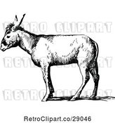 Vector Clip Art of Retro Donkey in Profile by Prawny Vintage