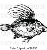Vector Clip Art of Retro Dory Fish by Prawny Vintage