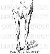 Vector Clip Art of Retro Engraved Horse Anatomy of Bad Conformations of the Fore Quarters in 3 by Picsburg