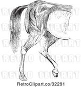 Vector Clip Art of Retro Engraved Horse Anatomy of Hind Quarter Muscular Covering in by Picsburg