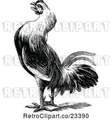 Vector Clip Art of Retro Farm Rooster 2 by Prawny Vintage