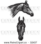 Vector Clip Art of Retro Horse Anatomy of Good Heads in Black and White by Picsburg