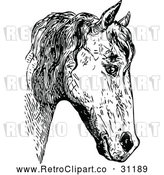 Vector Clip Art of Retro Horse Face 2 by Prawny Vintage
