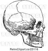 Vector Clip Art of Retro Human Skull 3 by Prawny Vintage