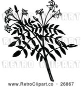 Vector Clip Art of Retro Jasmine Branch by Prawny Vintage