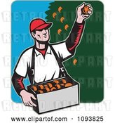 Vector Clip Art of Retro Male Fruit Picker Picking Oranges from a Tree by Patrimonio