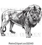 Vector Clip Art of Retro Male Lion by BestVector
