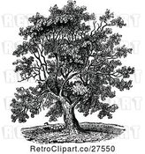 Vector Clip Art of Retro Mature Black Walnut Tree by Prawny Vintage