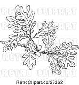 Vector Clip Art of Retro Oak Branch with Leaves and Acorns by Prawny Vintage