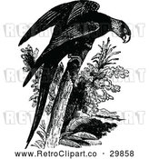 Vector Clip Art of Retro Parrot by Prawny Vintage