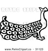 Vector Clip Art of Retro Peacock 1 by Prawny Vintage