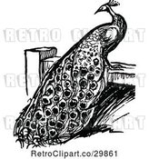 Vector Clip Art of Retro Peacock on a Fence by Prawny Vintage