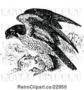 Vector Clip Art of Retro Peregrine Falcon by Prawny Vintage