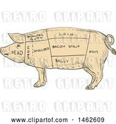 Vector Clip Art of Retro Pig Profile Showing Cuts of Meat, in Drawing Sketch Style by Patrimonio