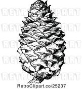 Vector Clip Art of Retro Pine Cone by Prawny Vintage