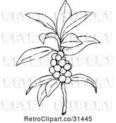 Vector Clip Art of Retro Plant with Berries by Prawny Vintage