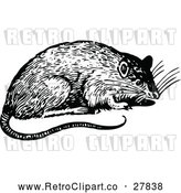 April 16th, 2018: Vector Clip Art of Retro Rat by Prawny Vintage