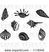 Vector Clip Art of Retro Seashells by Vector Tradition SM