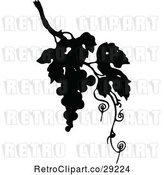 Vector Clip Art of Retro Silhouetted Grapes and Vine by Prawny Vintage