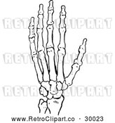 Vector Clip Art of Retro Skeleton Hand by Prawny Vintage